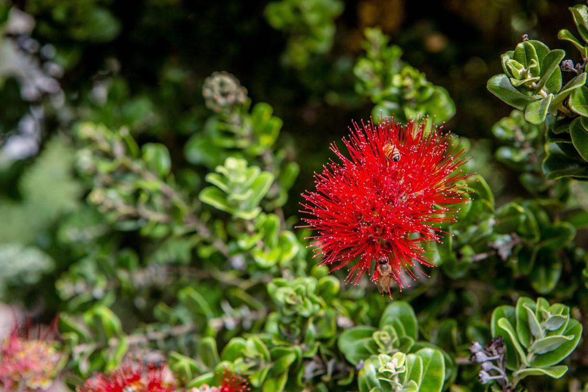 Kula Maui Flowers